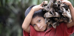 Honduras: A death in the Aguan Valley