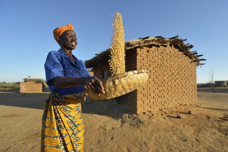 Frances Mtonga winnows corn in Chibamu Jere, Malawi.